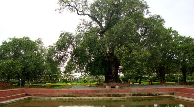 when was buddha born near Pushkarini and bodhi tree lumdini where Buddha was born